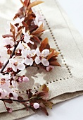 Twig of blossoming plum on linen cloth