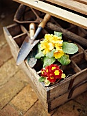 Old wooden box with flowerpots and garden tools
