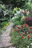 Flowering plants along garden path