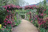 Climbing roses on pergola over garden path
