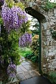 Wisteria growing next to doorway in garden wall