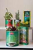 Various herbs in old tin cans on white kitchen table and vintage shelf