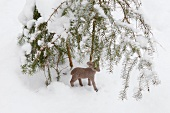 Small deer figure in snow