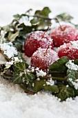 Äpfel und Efeu im Frost