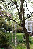 Aufgefädelte Schnüre an blühendem Obstbaum im Garten