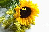 Sunflower & goldenrod