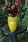 Yellow vases of camellias on chair in garden