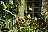 Wooden building in cottage garden