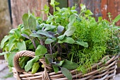 Mixed garden herbs in a wicker basket