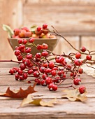 Autumnal centrepiece of rosehip twigs