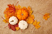 Three pumpkins on autumn acorn leaves