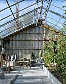 Gewächshaus mit tragenden Tomatenpflanzen und ausgestellten Skulpturen