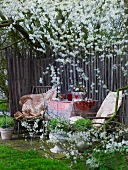 Spring atmosphere in garden with fenced-off seating area
