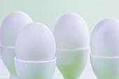 weiße Eier im Eierbecher