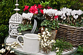 Snowberries, cyclamen, azaleas and lantern on small garden table