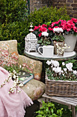Old armchair with books and snowberries, stool and side table with cyclamen and azaleas in the corner of the terrace