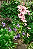 Blühende Lilien und Schmucklilien auf einer Terrasse