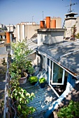 View from above of plant pots on modern roof terrace with open doors leading into apartment