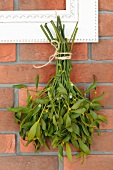Bunch of mistletoe hanging on a brick wall