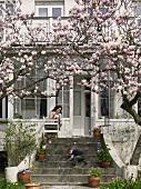 Blühender Magnolienbaum vor Villa und spielendes Kind auf Steintreppe