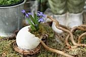 Eierschale mit Blaustern auf Moosbett