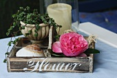 Rose bloom and seashell in wooden box