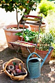 Old folding chair in the garden next to a metal watering can and basket with craft supplies