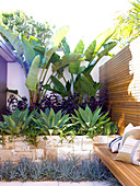 Tropical oasis in designer courtyard - banana and agave plants in raised bed with stone surround next to bench integrated into wooden partition wall
