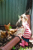 Little girl feeding hens