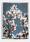 Flowering magnolia branches (abstract)