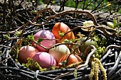 Colourful, dyed Easter eggs in nest