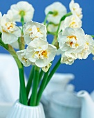 White double narcissus in vase