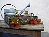 Rustic crate with small flowerpots