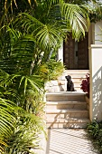 Dog on steps leading to front door in Mediterranean garden