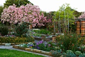 Flowering cherry tree in gardens