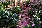Stone path through spring garden