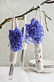 Blue hyacinths in test tubes with crocheted holders