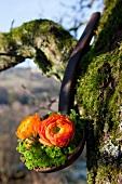 Flower arrangement of ranunculus and moss