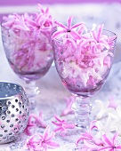 Hyacinth florets in wine glasses
