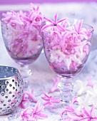 Hyazinthenblüten in Gläsern
