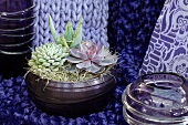 Succulents in a ceramic bowl