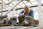 Woman planting a flowering arrangement in greenhouse