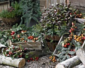 Winter arrangement with crab apples and leucothoe