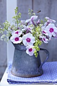 Phlox and bedstraw in small zinc vase