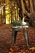 Pumpkins on wooden stool in autumnal woodland