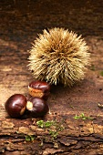 Chestnuts with and without the spiny shell