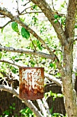 Rusty container hanging from branch of tree