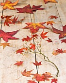 Autumn leaves and twig on wooden surface
