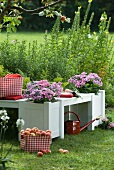 Red and white gingham basket of apples in front of white-painted wooden bench with integrated planters in summer garden