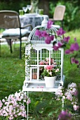 Potted flowering plants in white, vintage bird cage in garden